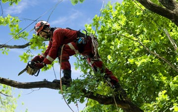 find trusted rated Swansea tree surgeons