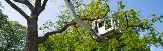 Swansea tree surgery services