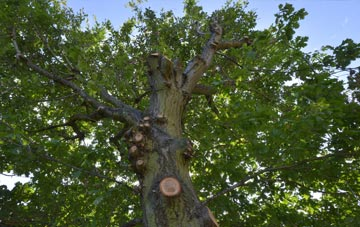 what is Swansea tree surgery?